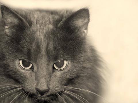фильмы про кошек