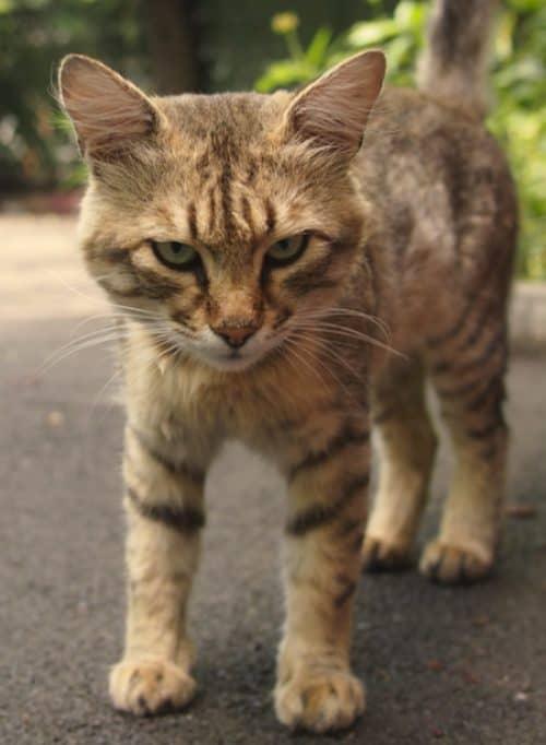 какие наполнители для кошек лучше
