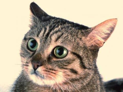 почему кошка кусается