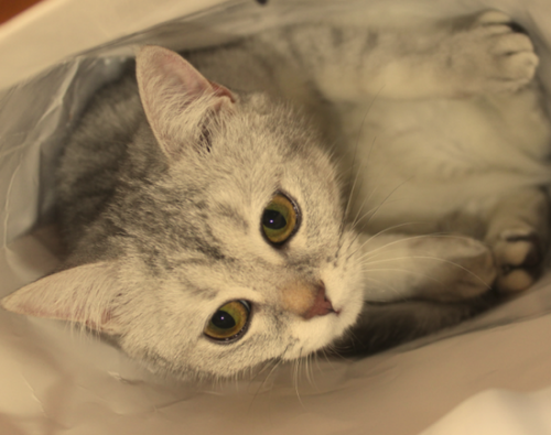 рейтинг сухих кормов для кошек