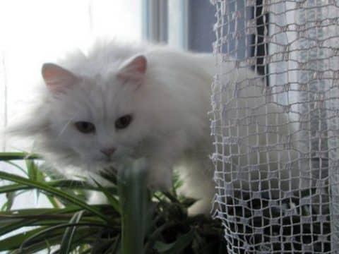 анализ кормов для кошек
