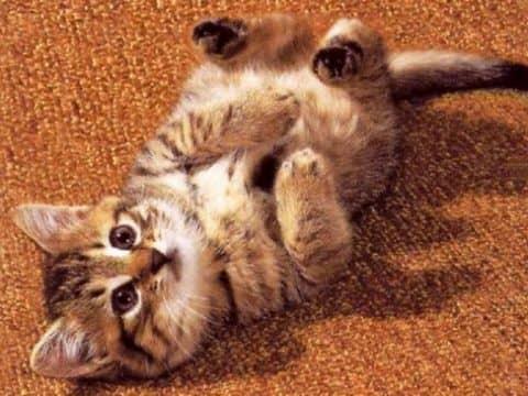 Болезни кошек и их лечение