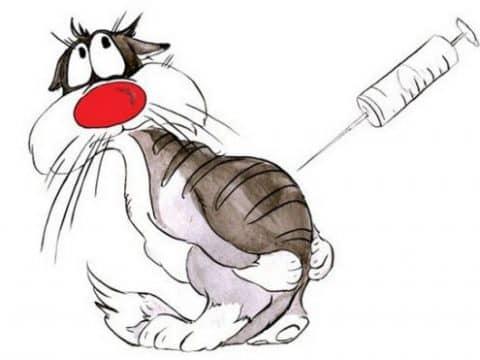 какие прививки нужны кошке