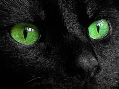 Какого цвета глаза у кошки