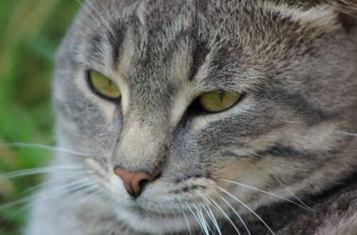 какую кошку лучше завести дома