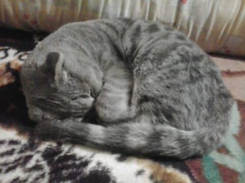 почему умирают кошки