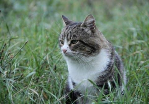 полезный корм для кошек
