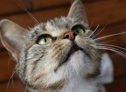 какие породы кошек самые ласковые