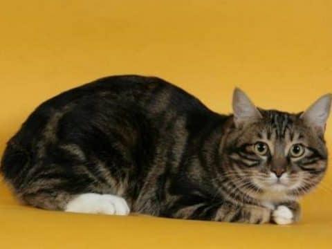 сколько раз надо кормить кошек