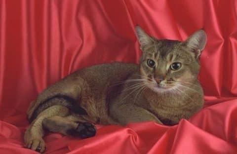 сколько лет самой старой кошке