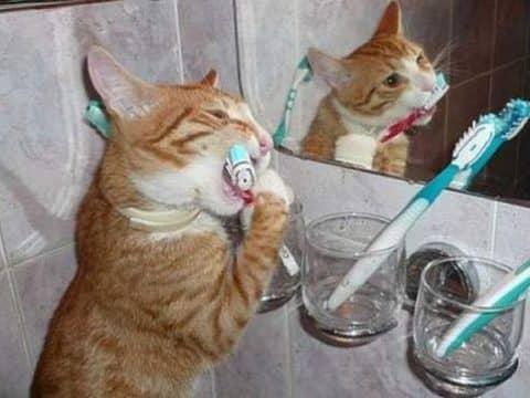 сколько зубов у кошки