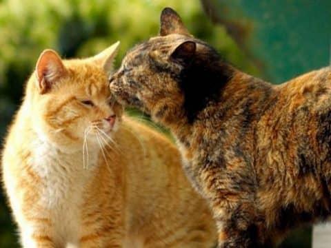 в каком возрасте сводят кошек