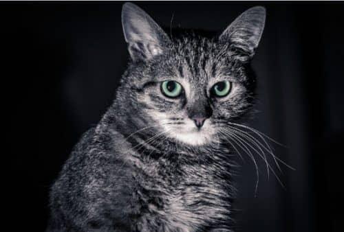 вреден ли корм для кошек