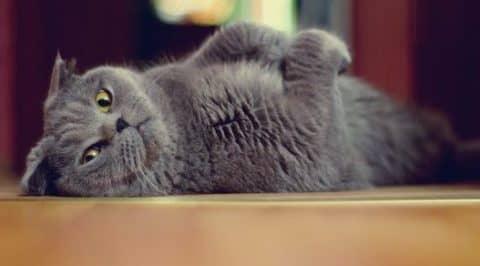 кожные болезни у кошек