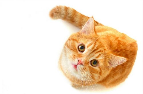 почему кошек нельзя бить