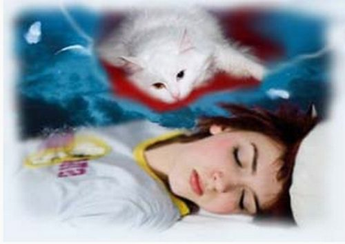 кормить кошку во сне