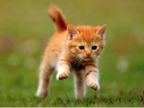 лечение экземы у кошек
