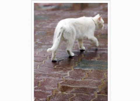 почему кошки уходят из дома