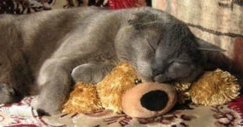 лечение запоров у кошек