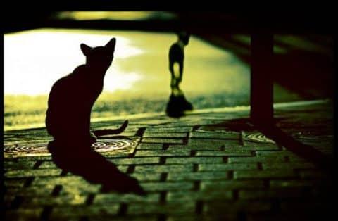 почему кошки уходят умирать из дома