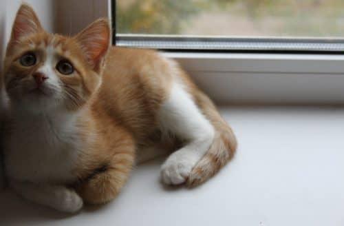 почему кошка гадит
