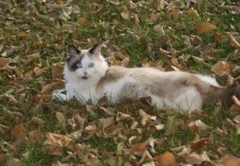 как приучить кошку к улице