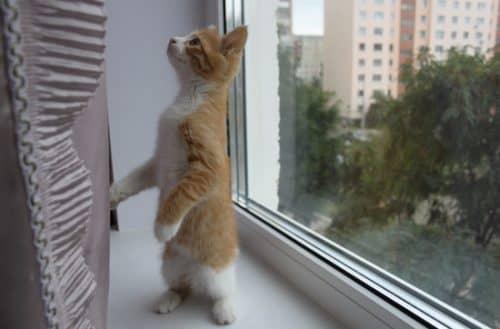 лечение ринита у кошек