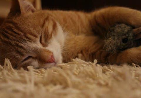 к чему снится мертвая кошка