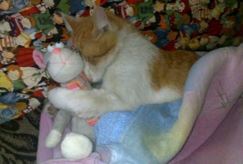 к чему снятся мертвые кошки