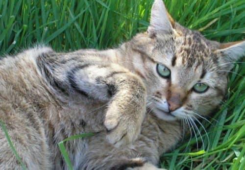 лечение желтухи у кошек