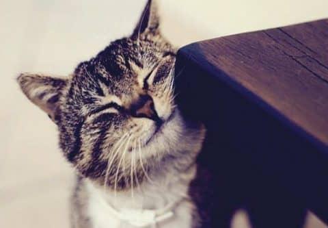 зачем кошки метят территорию