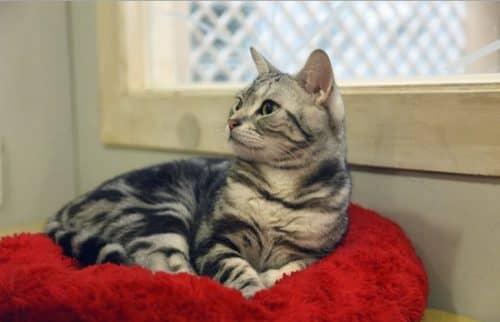 коврик для кошки своими руками