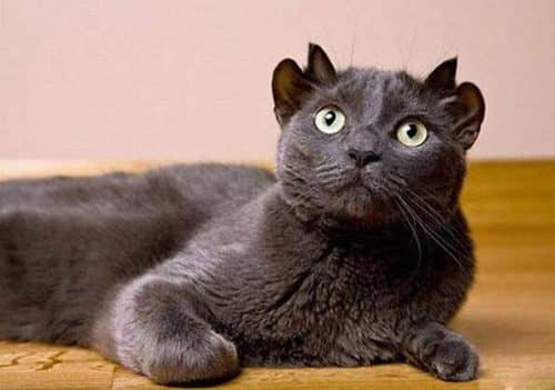 котенок Йода