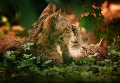 помощь кошке при родах