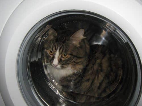 как правильно приучить котенка купаться