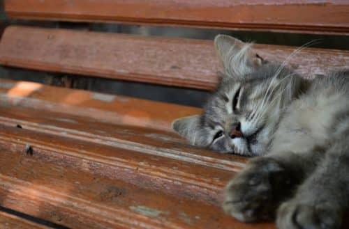 какие прививки нужно сделать котенку