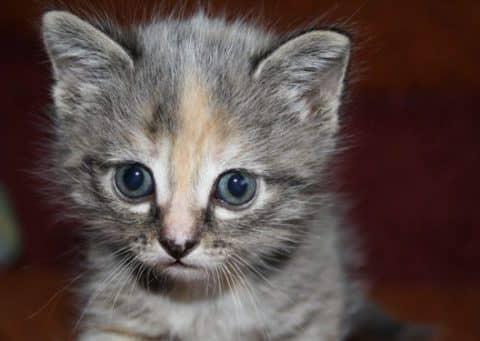 когда нужно делать прививки котятам