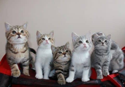 когда и как часто надо делать прививки котятам