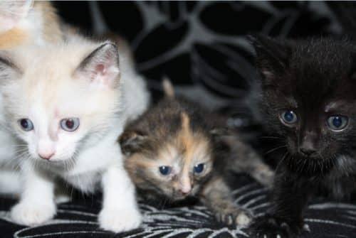 нужно ли прививки котятам