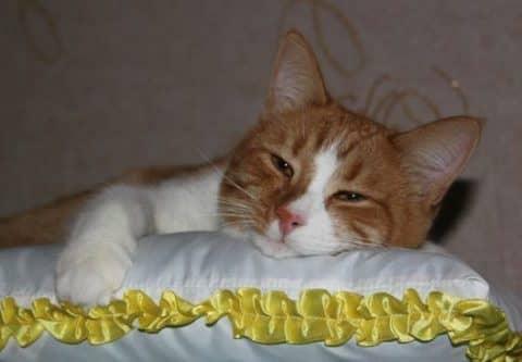 подстилка для кошек своими руками