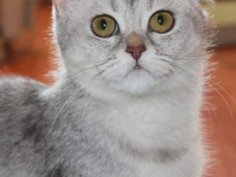 звук которые не любят кошки