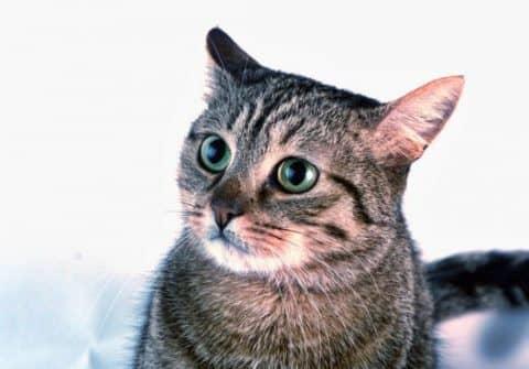 звуки привлекающие кошек