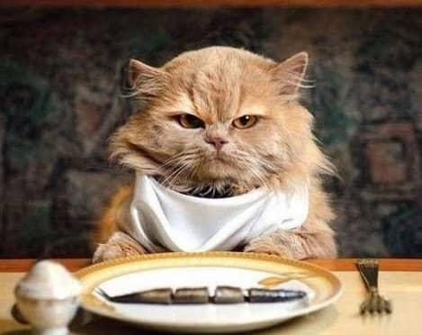 Чем кормить стерилизованную кошку. Выбор корма